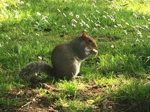 JG-Squirrel