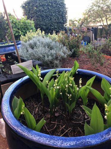 Julia B - Gardening